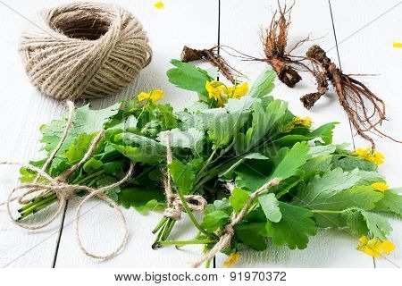 Bunches Of Celandine And Roots - Harvesting For Herbal Medicine