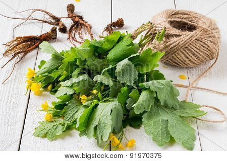 Celandine In Bundles And Roots For Drying