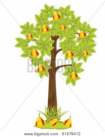 Tree with pear