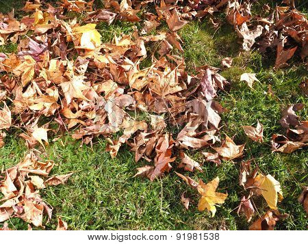 Autumn leaves fallen on grass