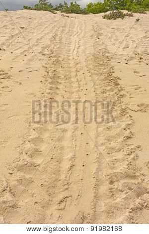 Trail Of A Turtle After Laying Its Eggs