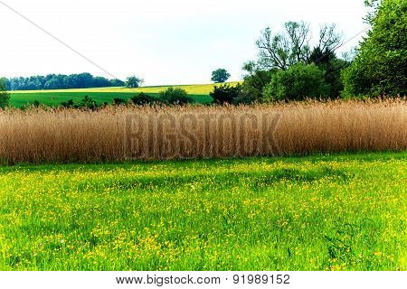 Landscape with reed field as a bird protection