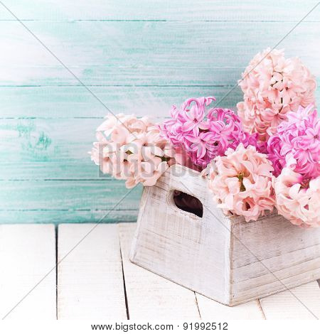 Background With Fresh  Blush Pink Hyacinths