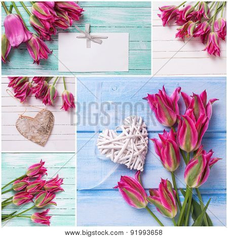 Collage From  Photos With Bright Pink  Tulips Flowers
