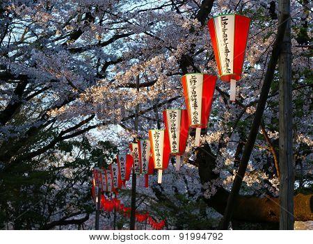 Cherry Blossom Festival With Lanterns At Ueno Park, Tokyo.
