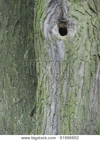 Hole in the tree