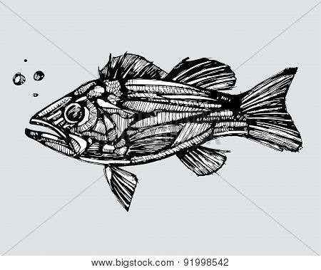 Study of a fish