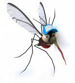 stock photo of mosquito  - Mosquito - JPG
