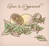pic of peppermint  - Illustration of hand drawn lemon and peppermint - JPG