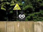 stock photo of bird fence  - Comical bird warning against Government budget cuts perched on a timber garden fence against a foliage background - JPG