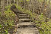 stock photo of step-up  - A step trail up a trail in the woods during spring - JPG