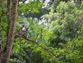 image of rainforest  - Tropical rainforest with a monkey sitting on a tree - JPG
