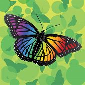 pic of butterfly  - Rainbow Butterfly is an illustration of a rainbow or multicolor butterfly on a green background of shapes and butterfly silhouettes - JPG