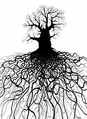 foto of contortion  - Editable vector illustration of a leafless oak tree with root system - JPG
