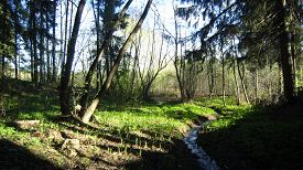stock photo of marshlands  - Forest brook and grass marshland landscape sunny weather - JPG