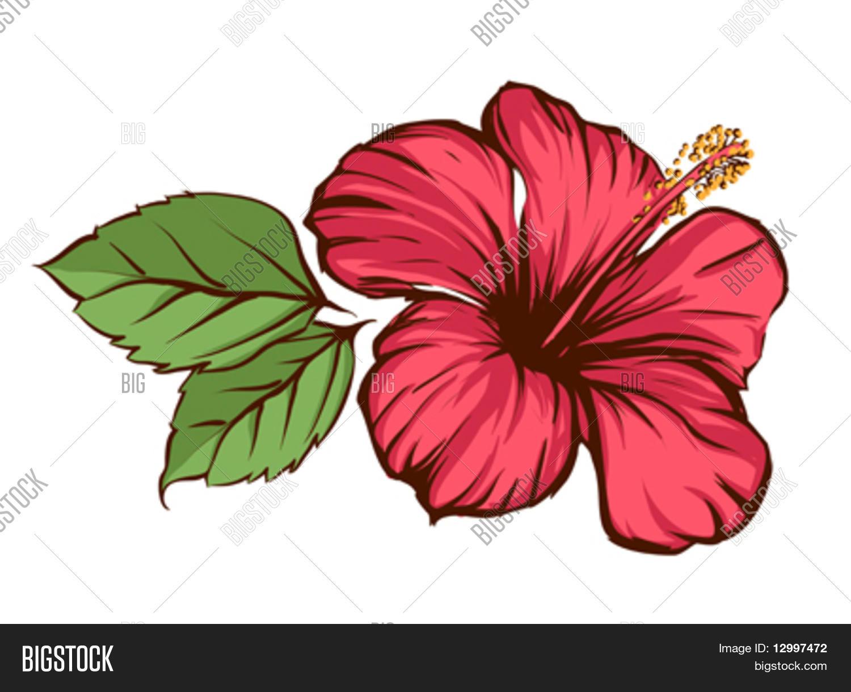 Vector y foto flores tropicales bigstock - Flores tropicales fotos ...