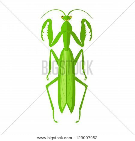 Nature green cartoon locust and cute flat grasshopper icon. Wild creature antenna invertebrate cute grasshopper agricultural zoo large green locust nature insect flat vector illustration