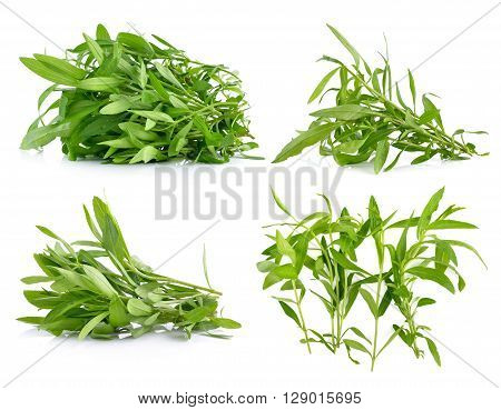 A Tarragon herbs are on white background