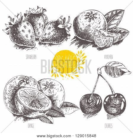 Series - vector fruit, vegetables and spices. Hand-drawn illustration in vintage style. Sketch. Healthy food. Linear graphic. Set of strawberry, cherry, mandarin, orange.