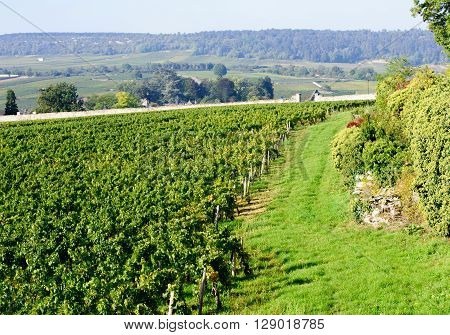 Vineyard in Burgundy near Beaune France Europe