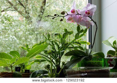 Floriculture On The Windowsill