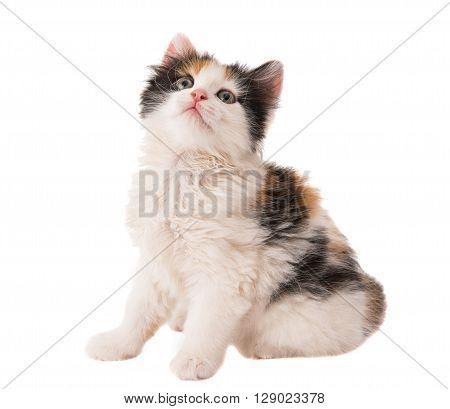 little kitten on white background, lie, compassion,
