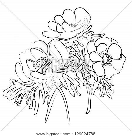 Vector illustration of an ink sketch of a flower anemones