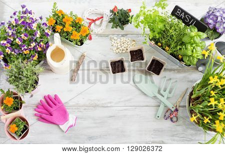 Gardening kit on wooden table at the studio