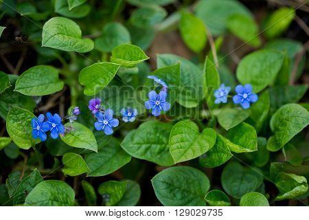 Macro photography of beautiful blooming springtime flowers - sign of spring season.