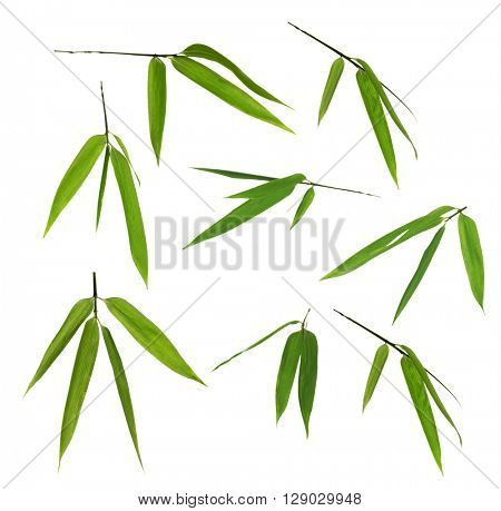 set of bamboo green leaves isolated on white background