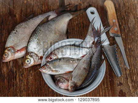 Raw freshly caught river fish. Selective focus ** Note: Soft Focus at 100%, best at smaller sizes