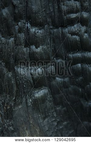 Blurred Burnt Wood Texture. Dark Abstract Wooden Background. A Tree Stump in the Forest