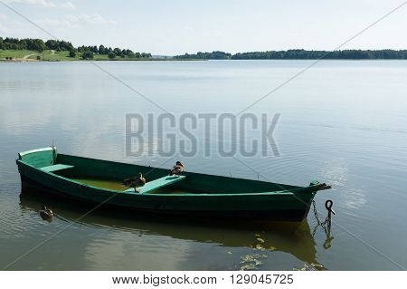 the wooden boat with ducks floats on the lake