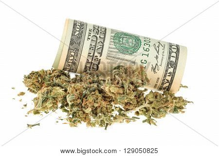 Marijuana and money isolated on white. close up