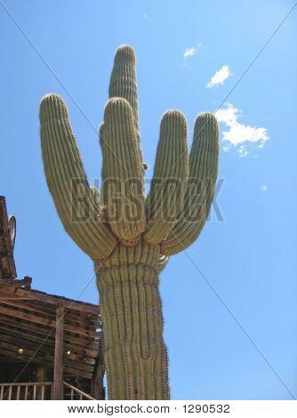 Extra Large Cactus