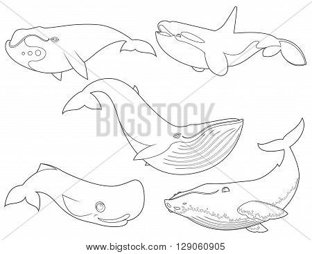 Outline vector illustration of set cartoon cute whales on white background for coloring book sea animals set collection of sea creatures