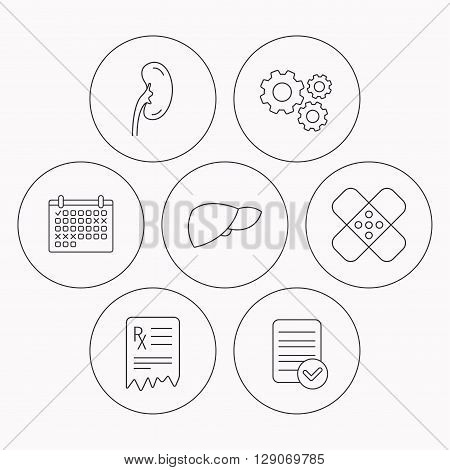 Liver, medical plaster and prescription icons. Kidney linear sign. Check file, calendar and cogwheel icons. Vector