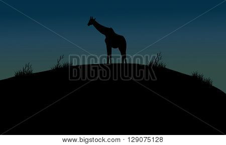 One giraffe silhouette in hills at the night