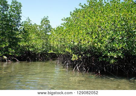 Mangrove forest in Palawan. Philippines. outdoors. backgrounds