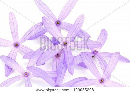 Petrea Flowers. (Queen's Wreath Sandpaper Vine Purple Wreath) isolated on white