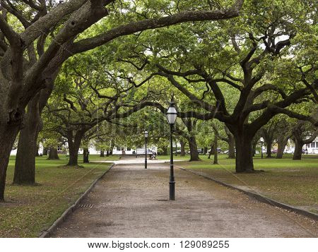 Historic downtown Charleston, South Carolina with live oaks