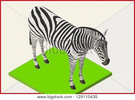 Zebra isometric flat vector. Animal 3d illustration