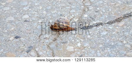 picture of a garden snail on apshalt road