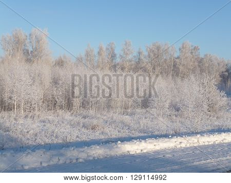 View of winter forest in Siberia. Trees in the snow.