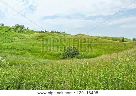 Picturesque green hills and wild flowers in the beginning of summer on a windy day