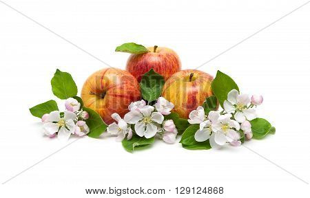 Apples and apple-tree flowers isolated on white background. horizontal photo.