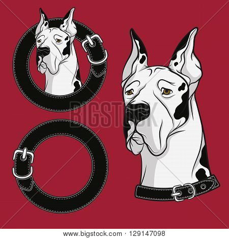 A set of color vector drawing of the dog in the collar. Isolated objects.