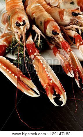 Delicious Raw Langoustines with Rosemary on White Plate Cross Section on Dark Wooden background
