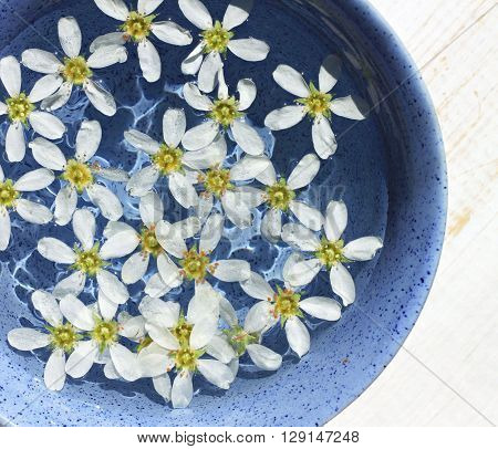 White flowers floating water surface in blue ceramic bowl on sunshine. Square.