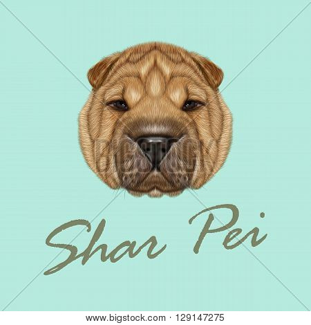 Vector Illustrated Portrait of Shar Pei dog. Cute red wrinkly face of domestic dog on blue background.